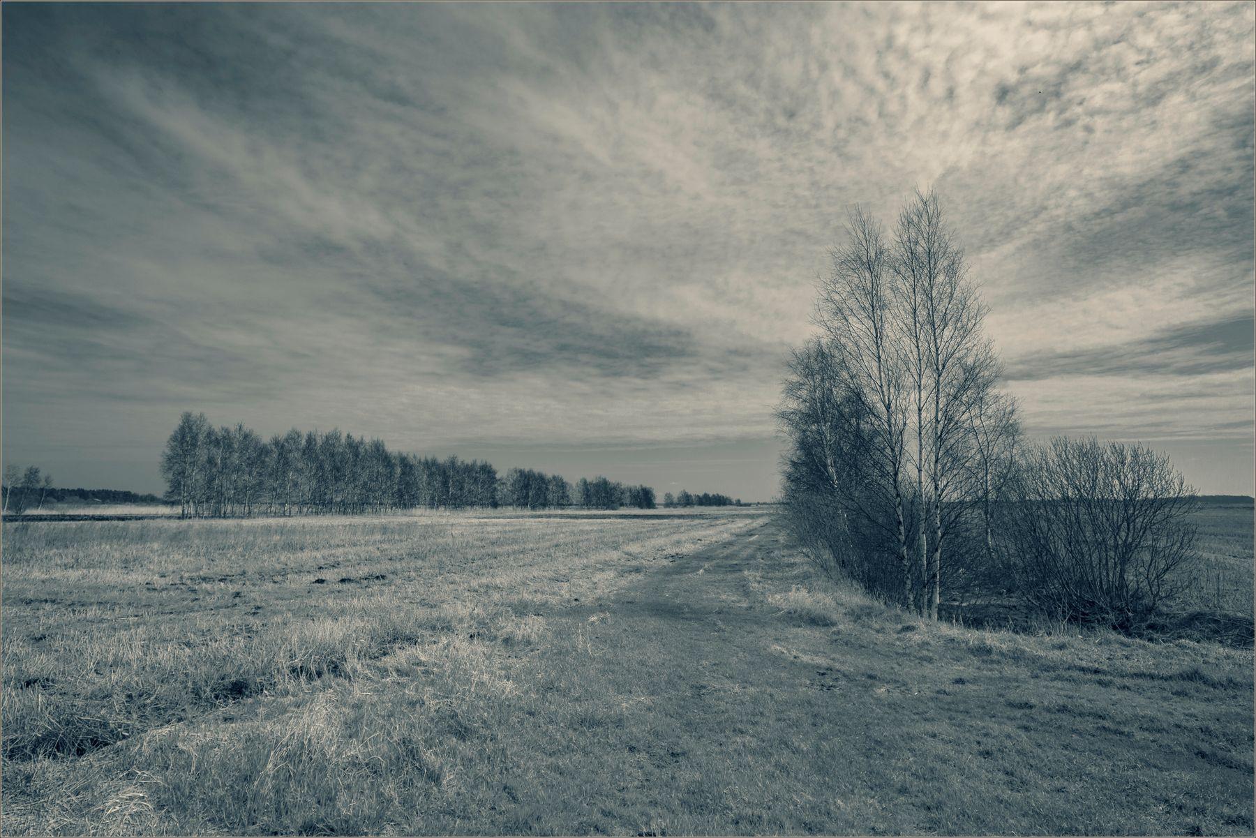 Молодая заря новый день обещая, серебристой росой, покрывает луга.