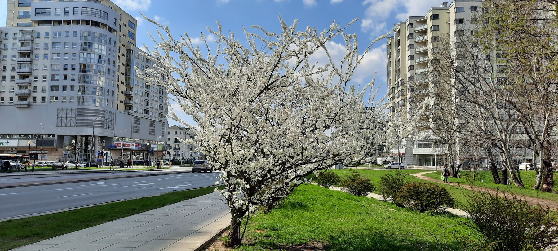 весна в городе весна город Варшава Польша