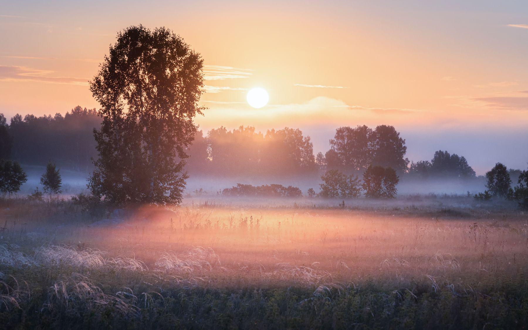 В золоте тумана утро туман восход солнце рассвет новосибирская область золотой час летнее