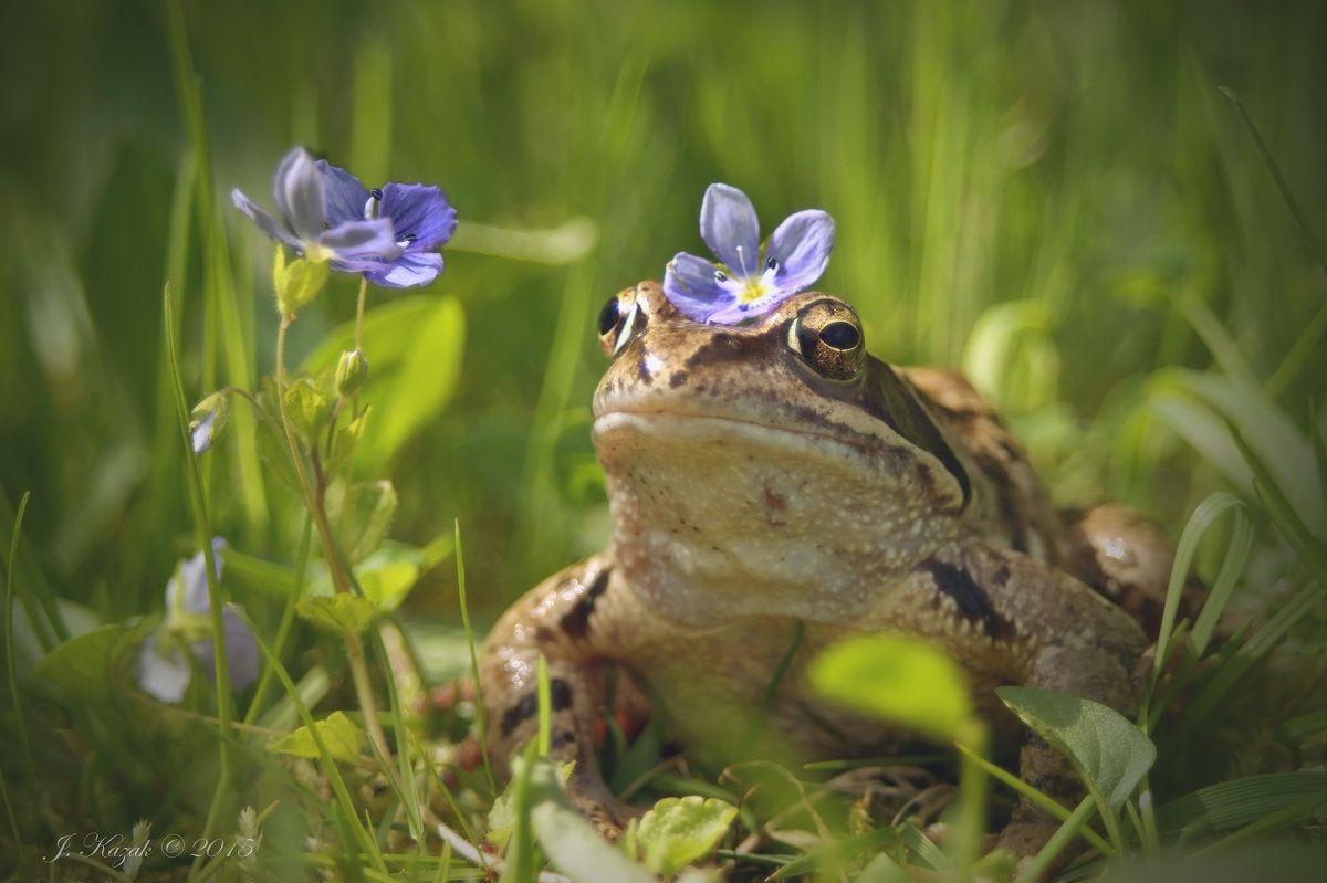 Модница. природа фауна животные