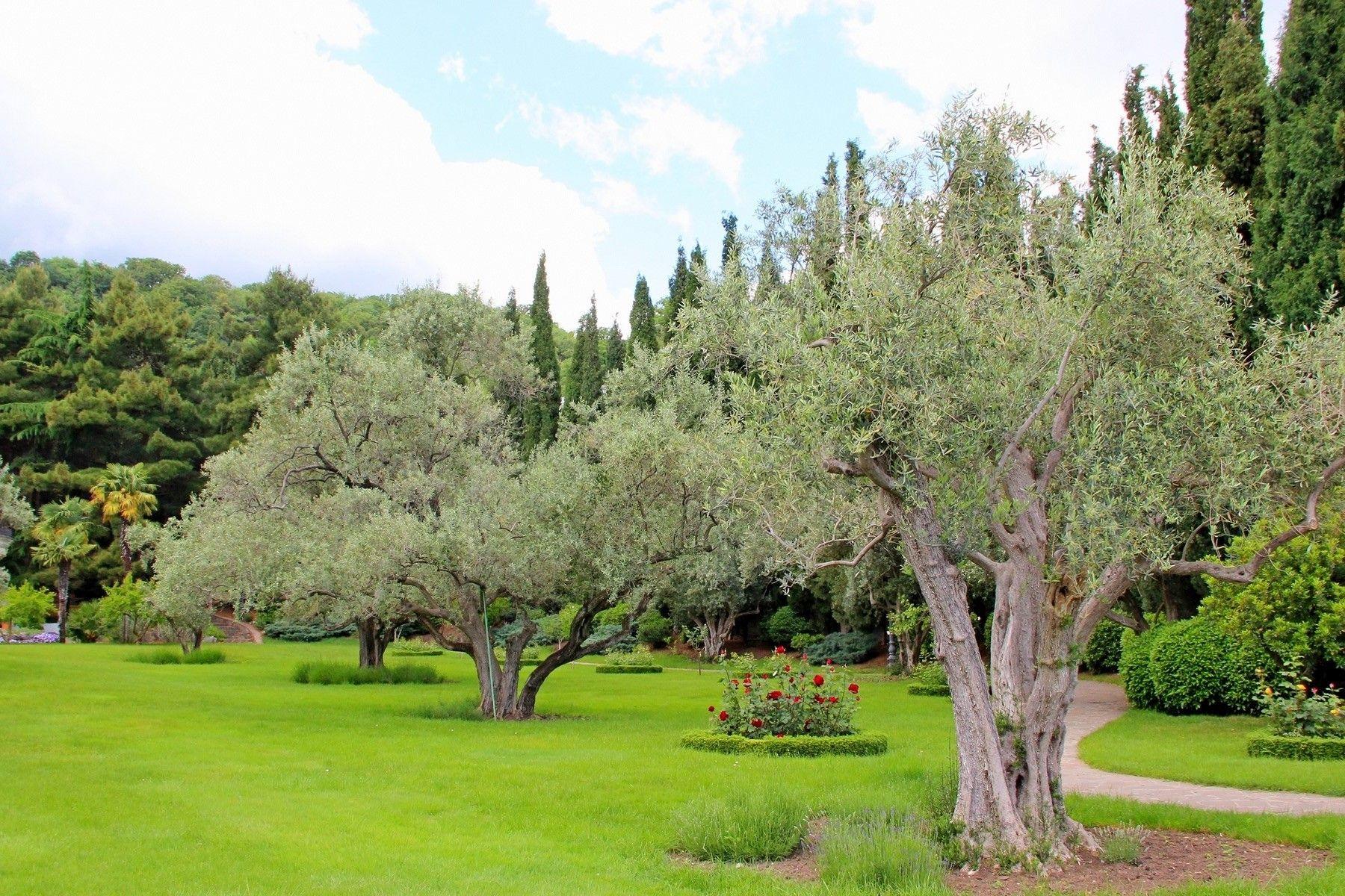 Райские кущи крым парадиз партенит оливы