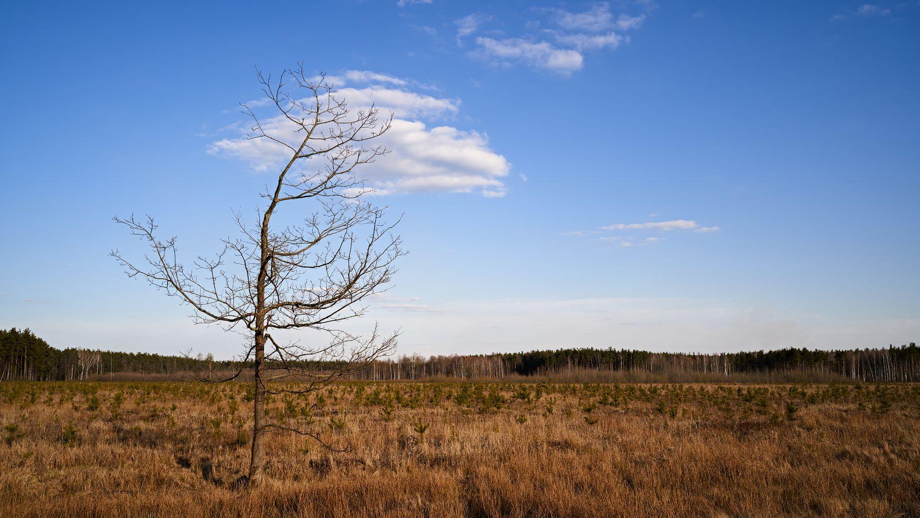В изоляции дерево весна поле пейзаж одиночество изоляция