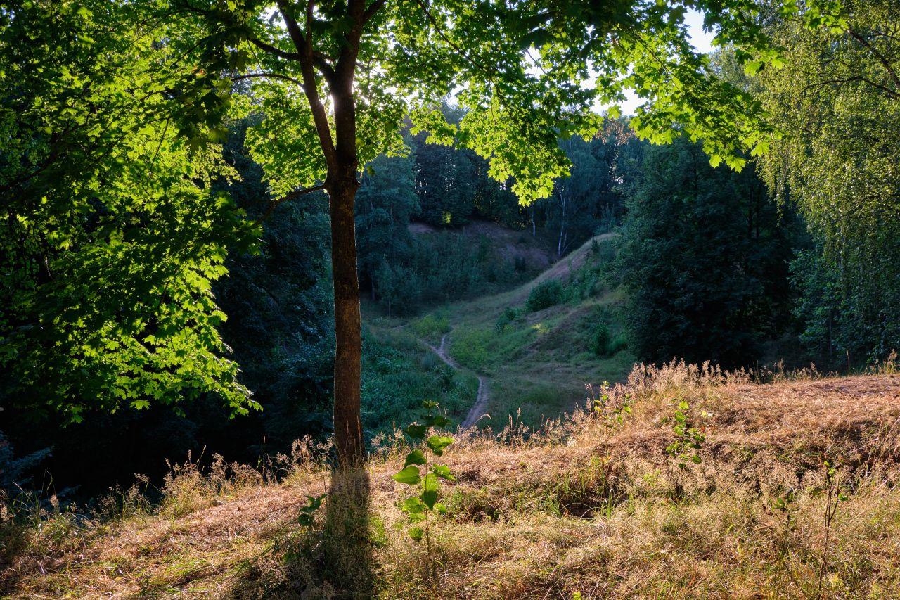 Свет и тень лето солнце деревья ветви листья трава тропинка