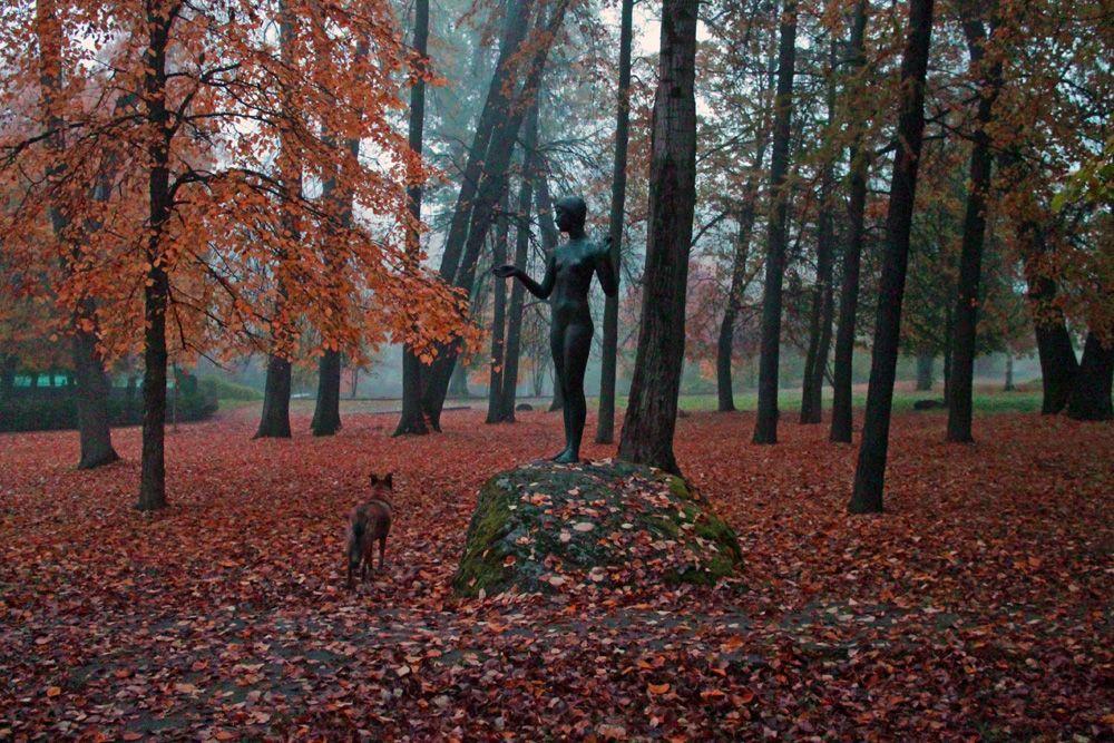 Осень Туман осень деревья листья