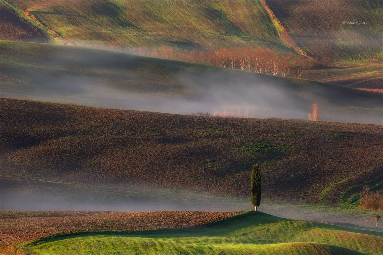 SOLITARIO italy san quirico d'orcia italia свет пейзаж италия тоскана кипарис toscana осень tuscany бельведере пейзажи тосканы
