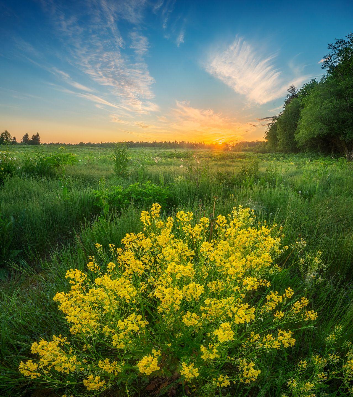 *** рассвет лето ленобласть цветы
