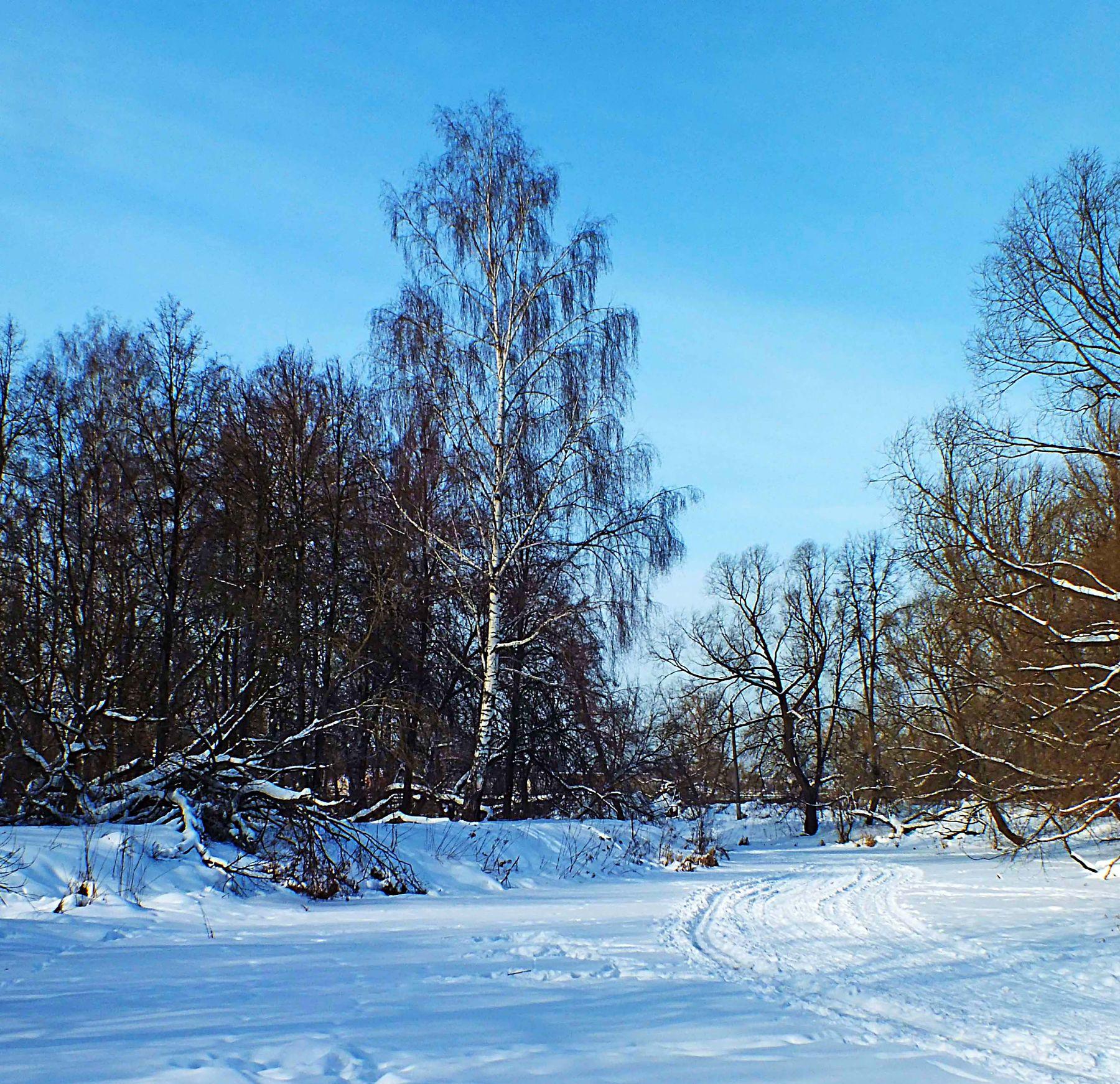 Зимнее безмолствие зима снег мороз