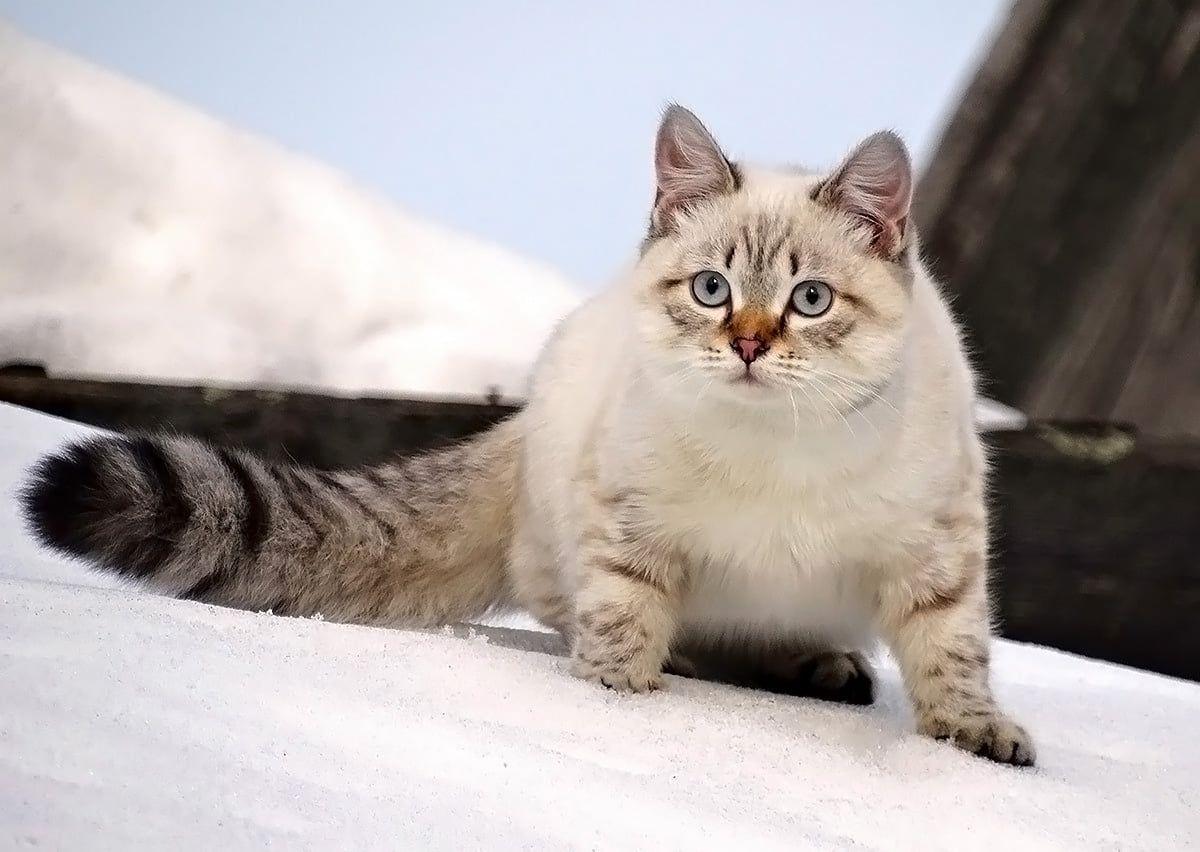 Тима Домашние животные Кот Тима