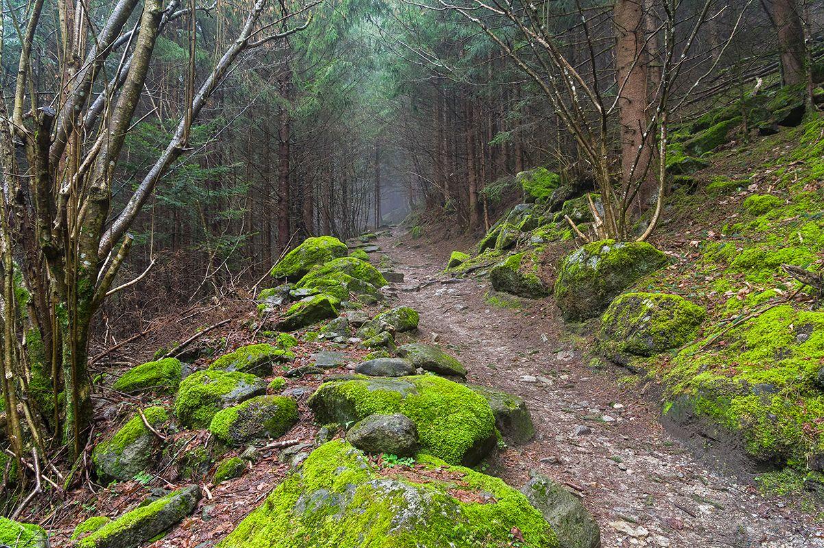 Прогулка в горах (1) - начало
