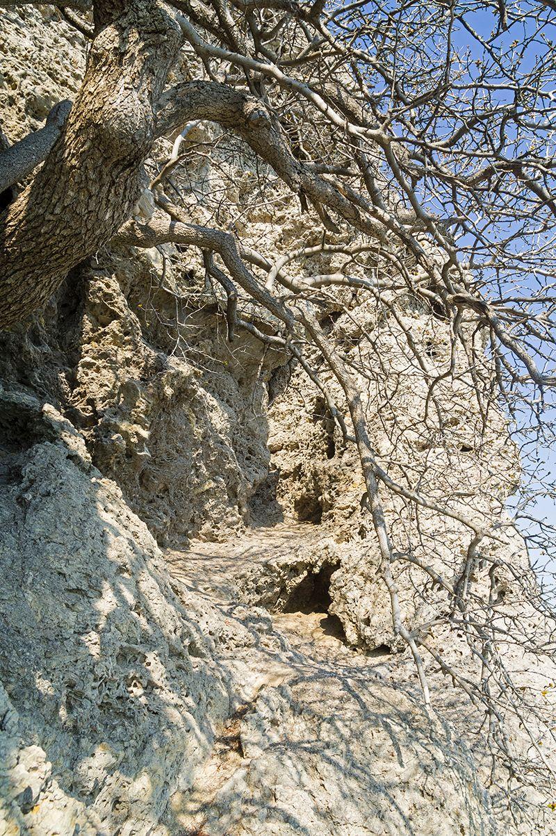 Про геологию и палеонтологию, или откуда взялись крымские горы (1)