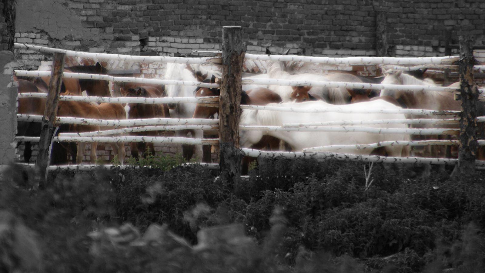цензура Лобаново Катайский район Курганская область цензура черный прямоугольник белый забор