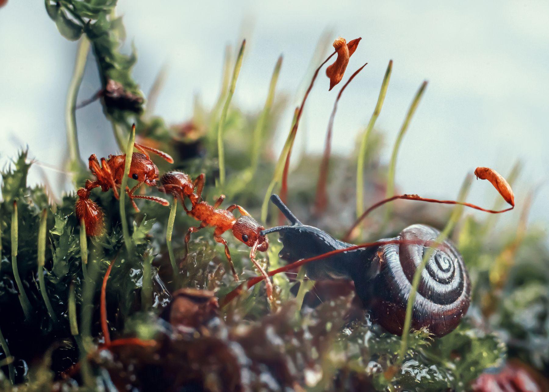 Знакомство муравьи мох улитка лес природа макро