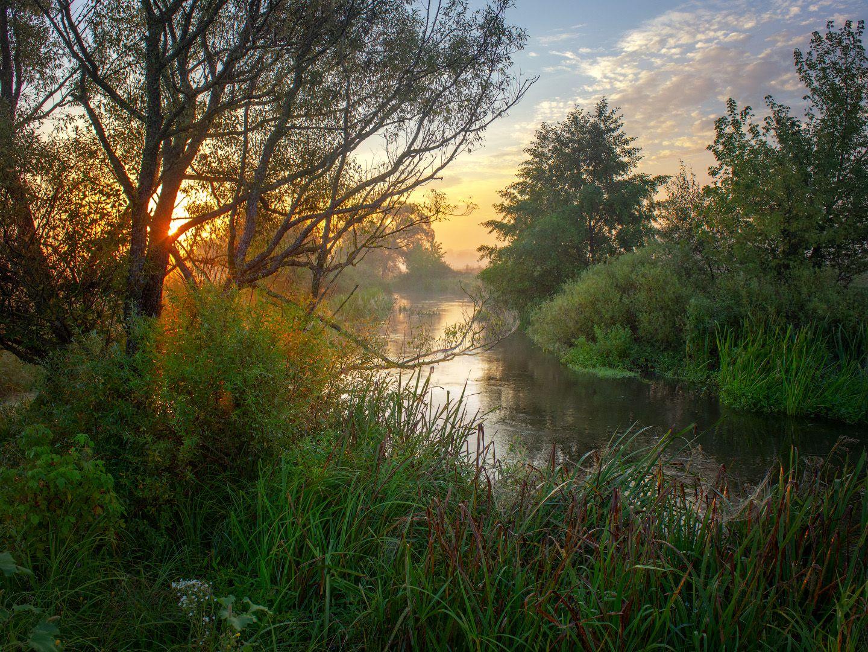 Раннее утро у реки пейзаж природа туман река волчья