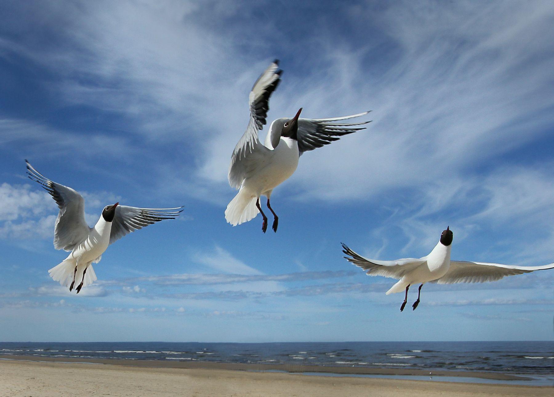 Дирижёр. чайки берег моря небо