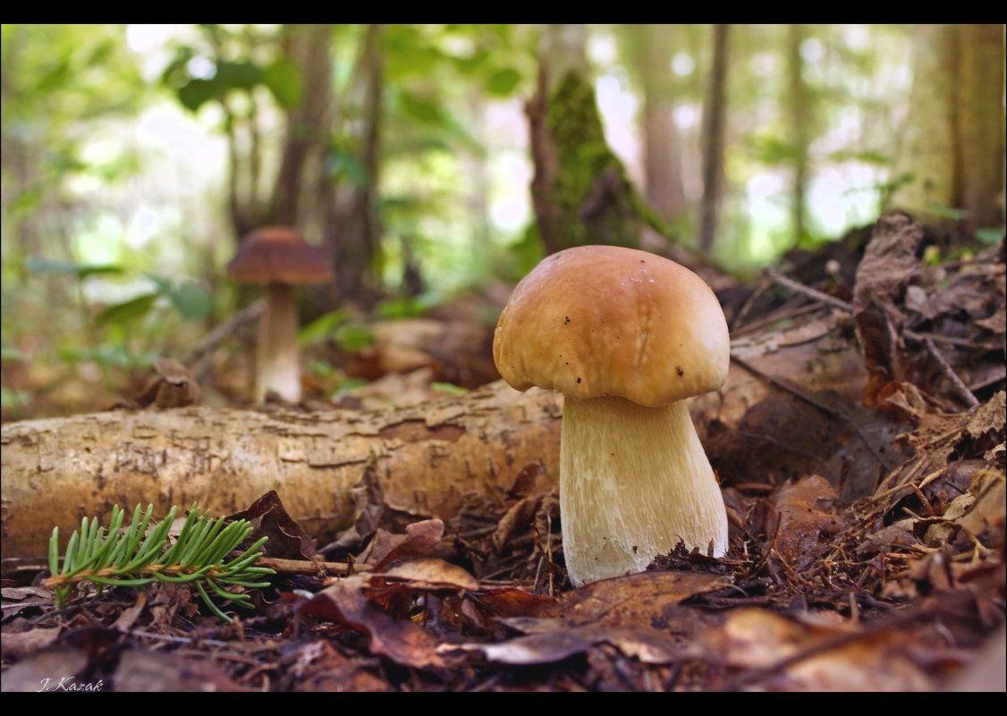 *** природа флора грибы