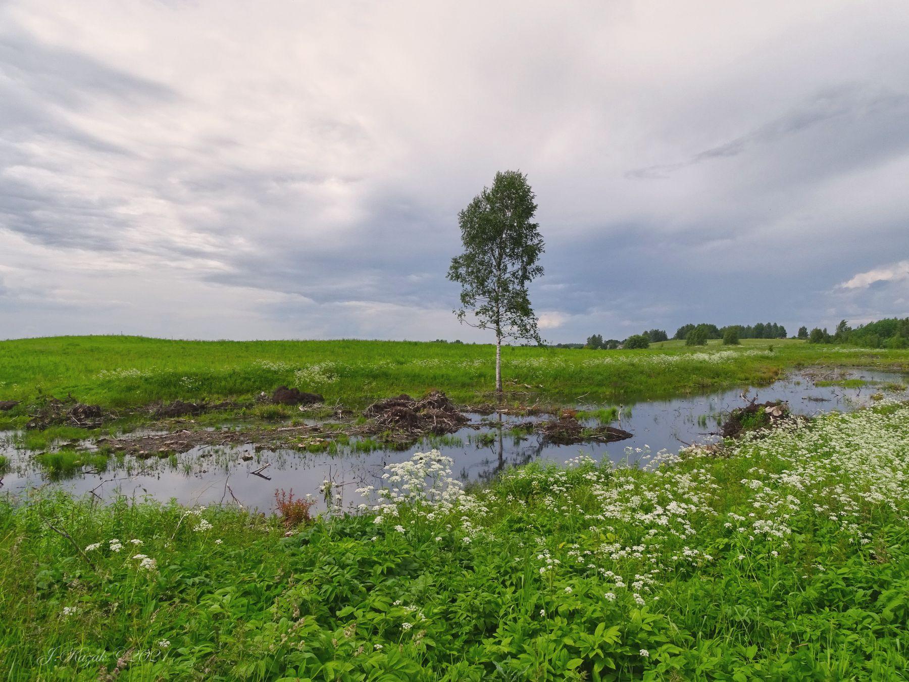 Березка. природа флора пейзаж