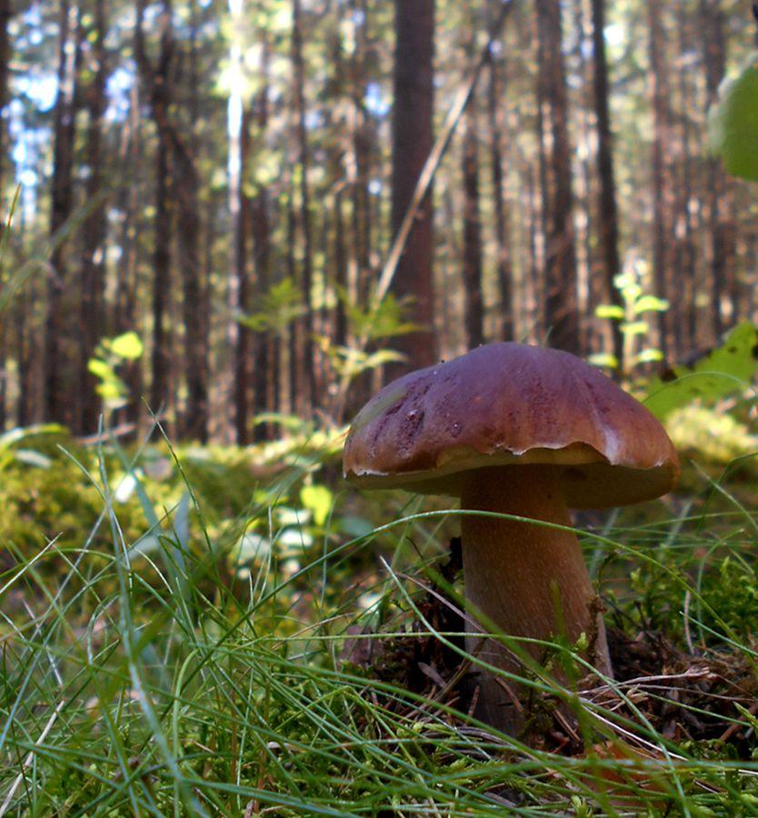 сила лес грибы