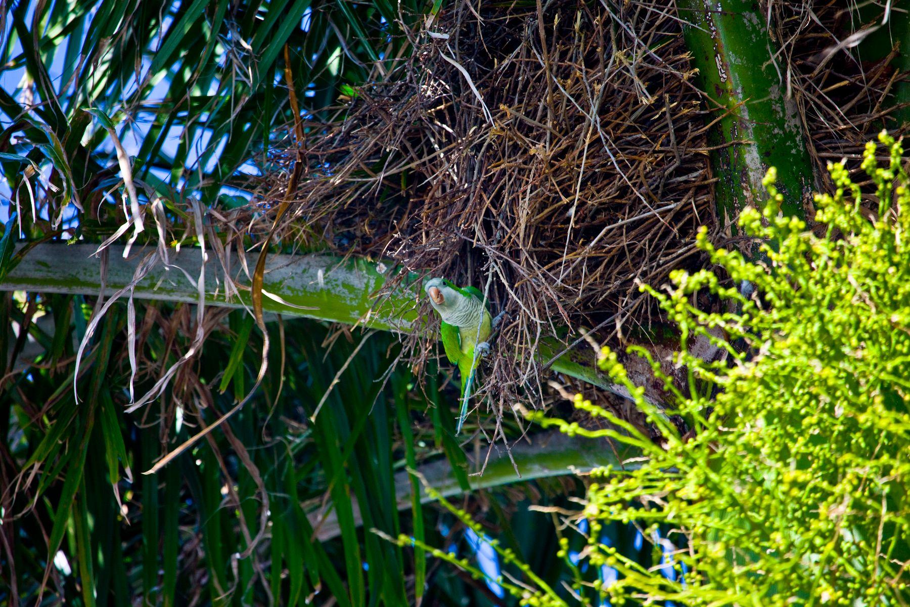 Опасность близка или гнездо попугая попугай