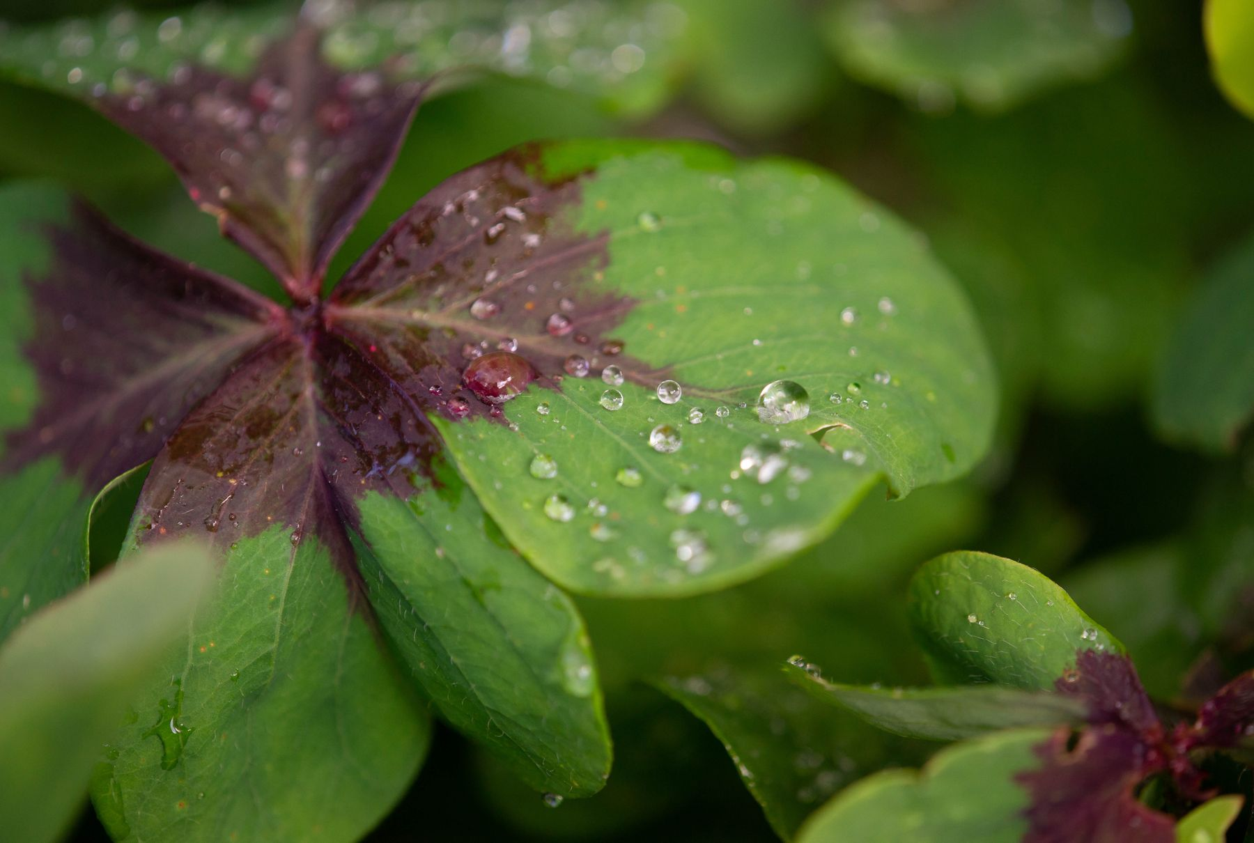 После дождя растения макро дождь