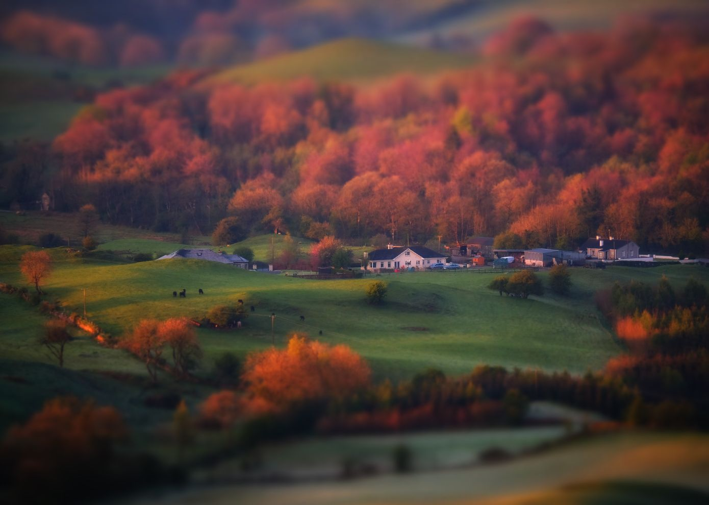 ...Irish toy scape... ireland nature outdoors landscape toyscape countryside rural morning sunrise dawn colored tinted bright slopes hills tones shades cottage farm trees scenic scenery picturesque wonderful awe europe tilt shift and miniature blured from above