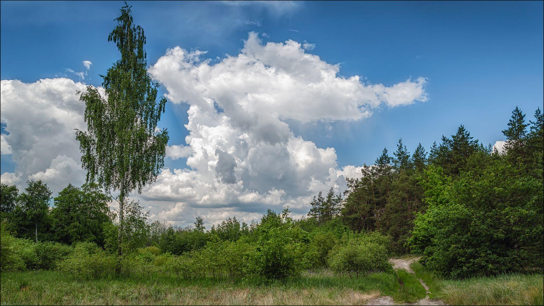 Летний полдень. лето пейзаж