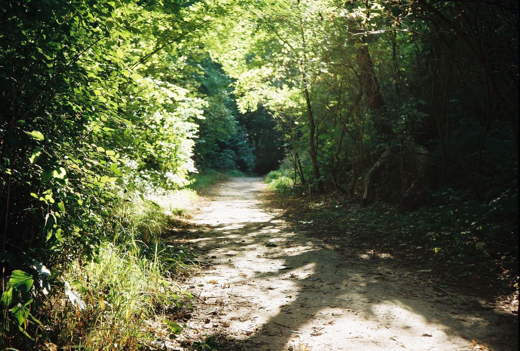 *** дорожка тропинка лес