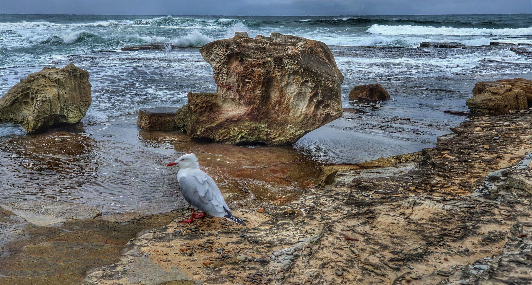 На берегу пустынных волн Стоял он, дум великих полн, И вдаль глядел. Австралия Сидней Камни чайка