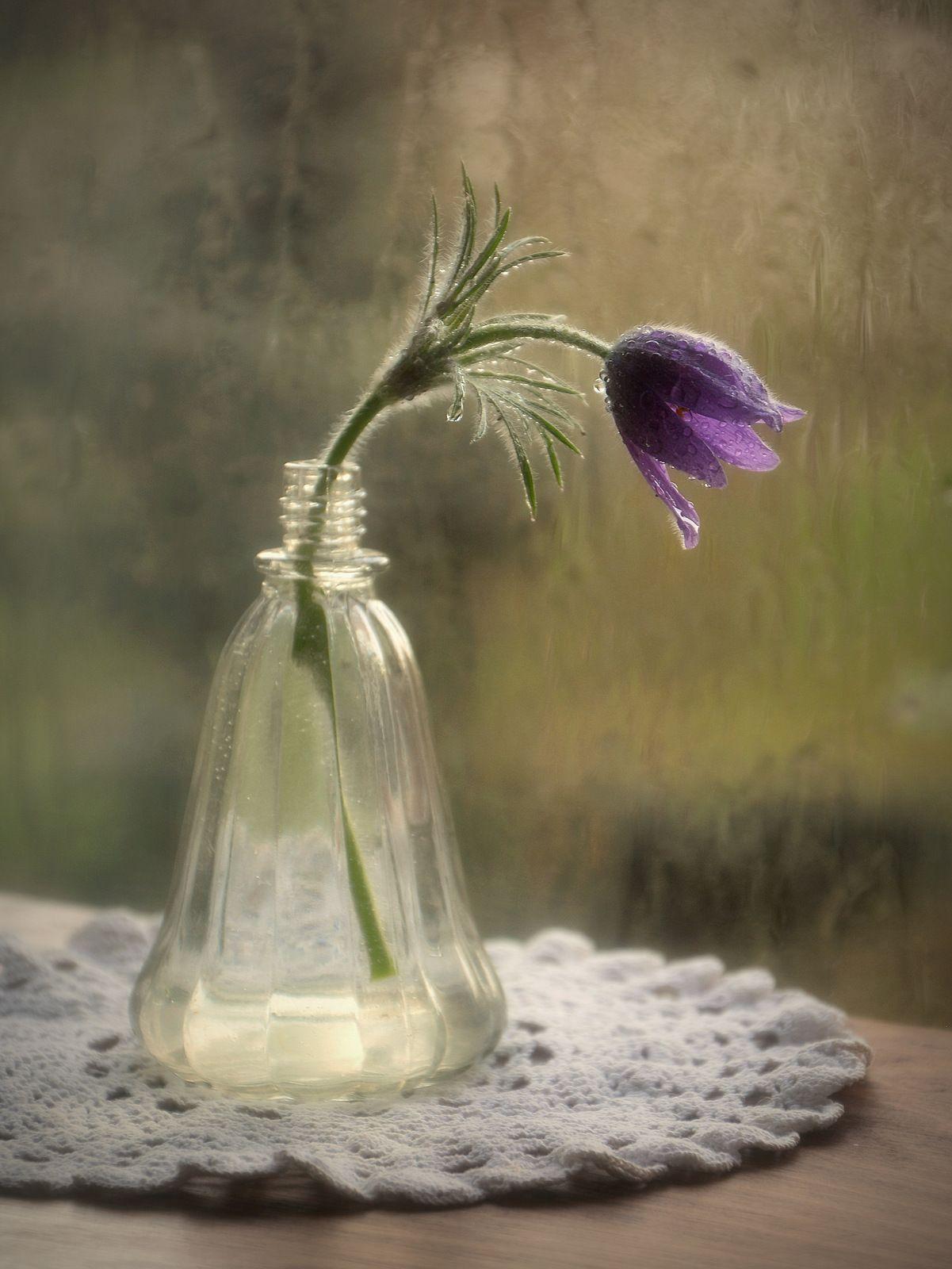 Цветок во флаконе Сергей Алексеев натюрморт