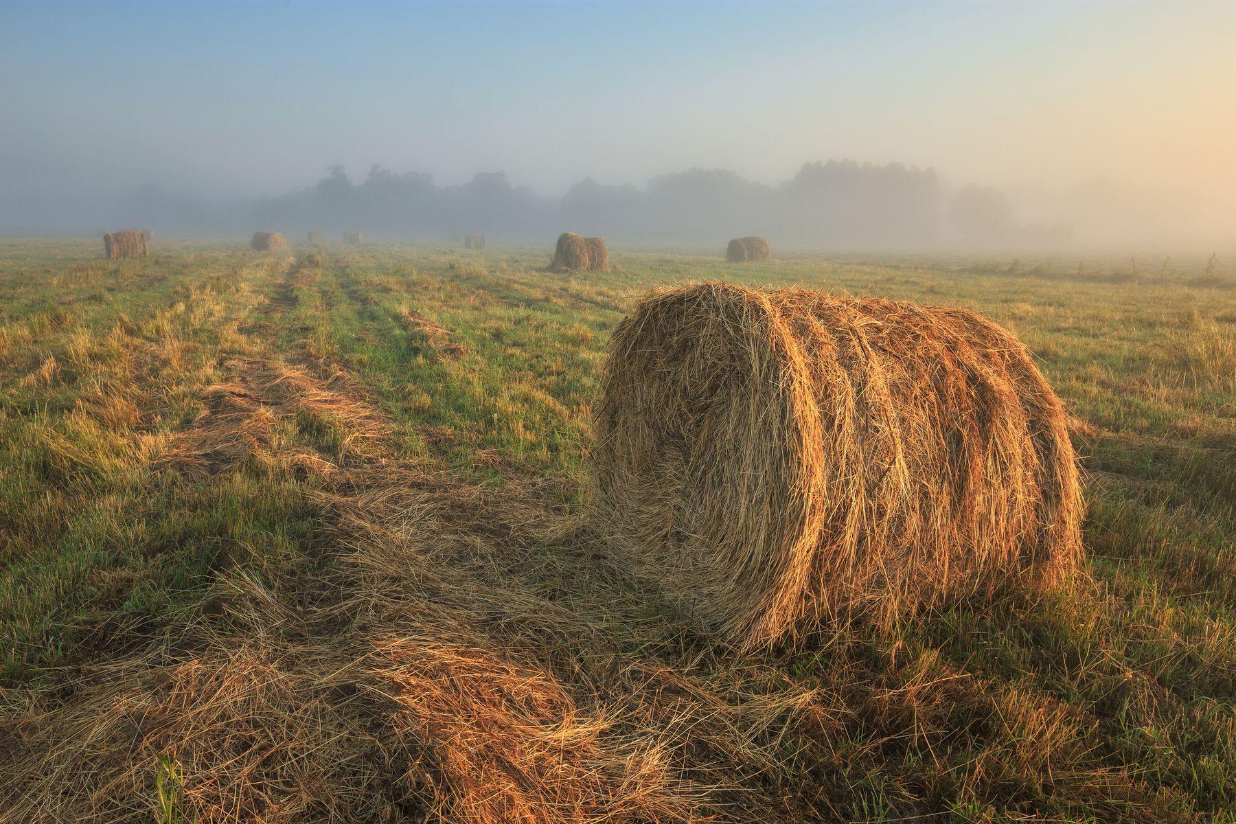 Запах сена и тумана 2021 Россия пейзаж утро лето сено поле лес трава туман