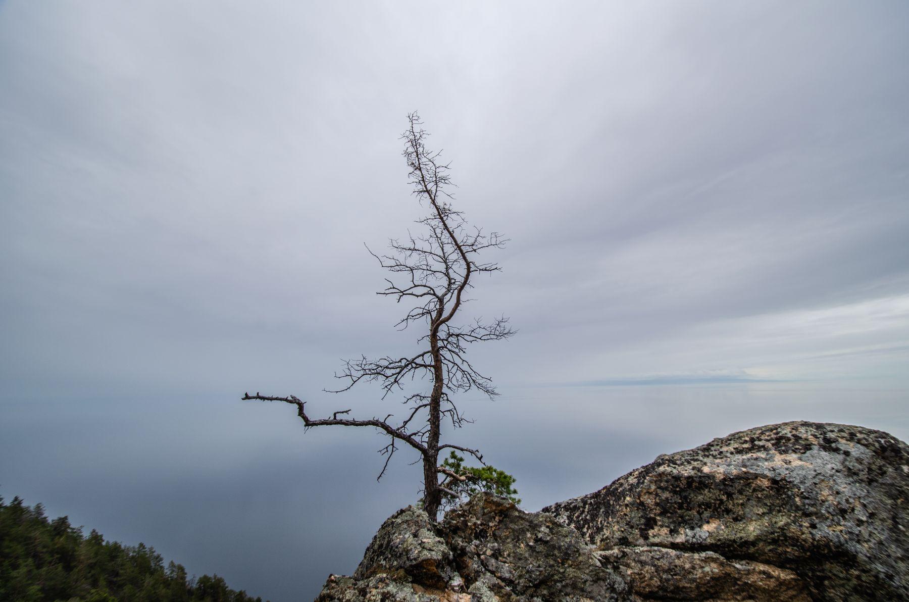 Одиночество дерево вид скала