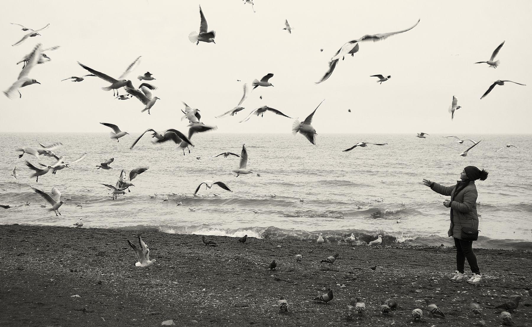 Море чайки море чайки