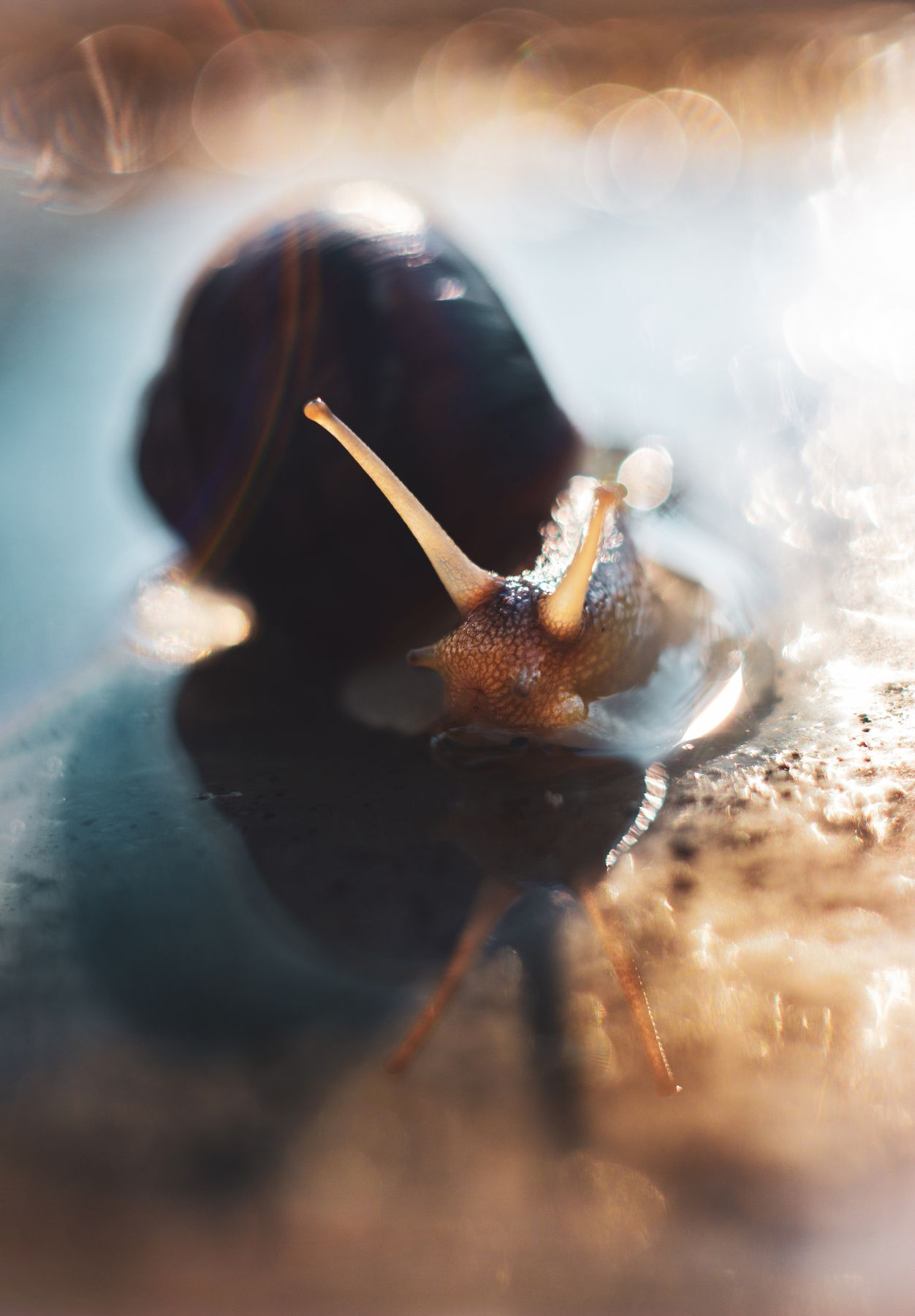 Sunset Bathing snail shell water wet bokeh light shine reflection horns blue teal orange yellow brown house look вода улитка раковина мокрый рожки отражение голубой оранжевый боке свет deep dark
