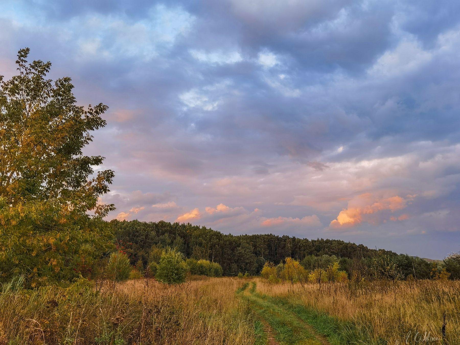 Летняя дорожка  в осень поле лес вечер дорога травы ясень рябина березы