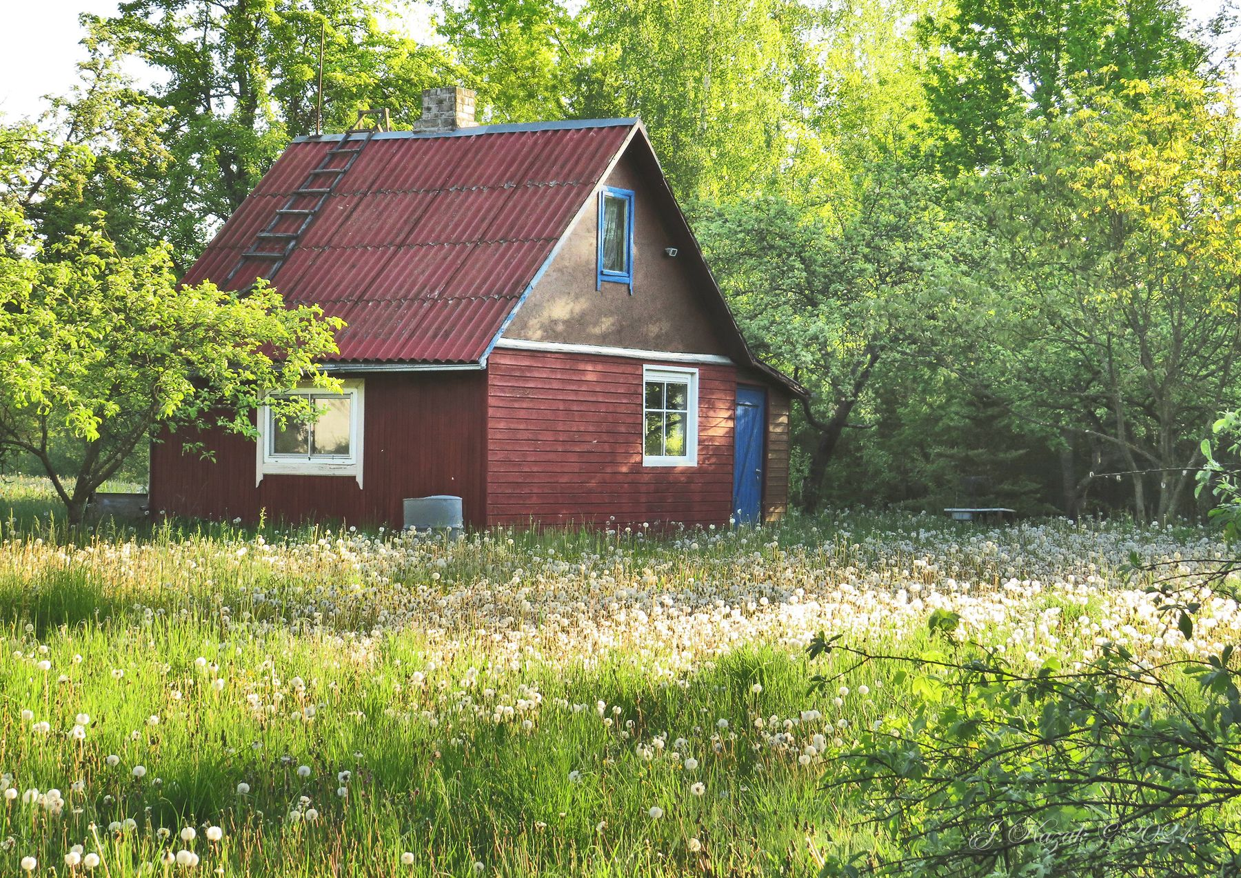 Заброшенный сад... природа утро