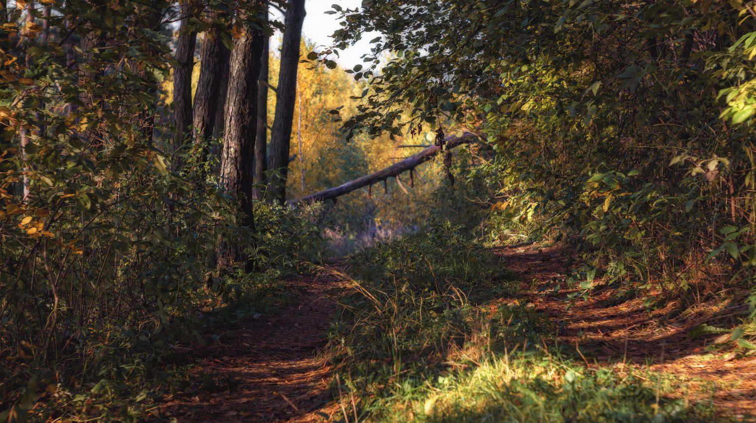 Утро в осеннем лесу лес осень
