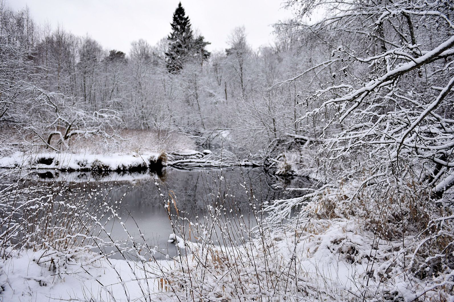 Прекрасные мгновения зимы
