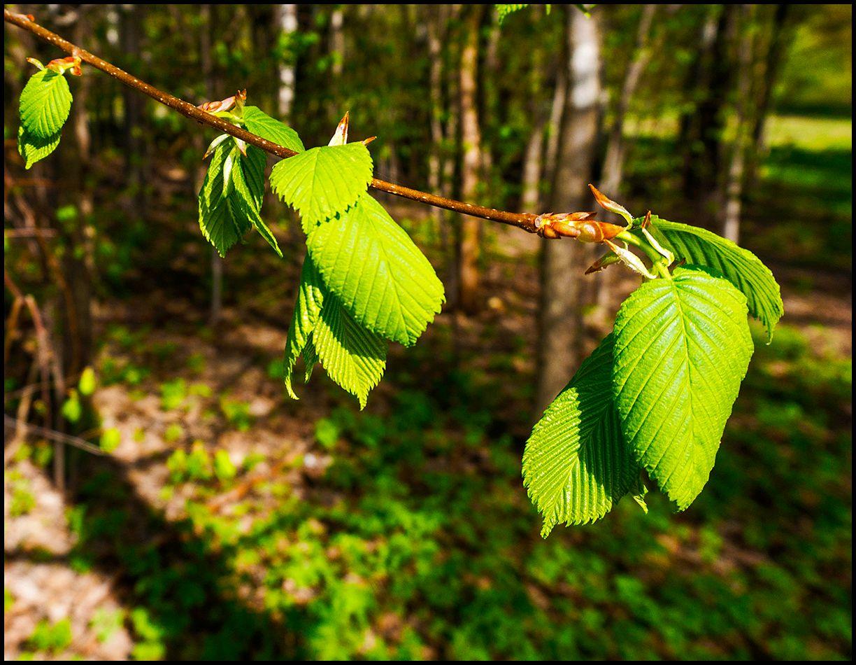 Пробуждение. Измайловский лес