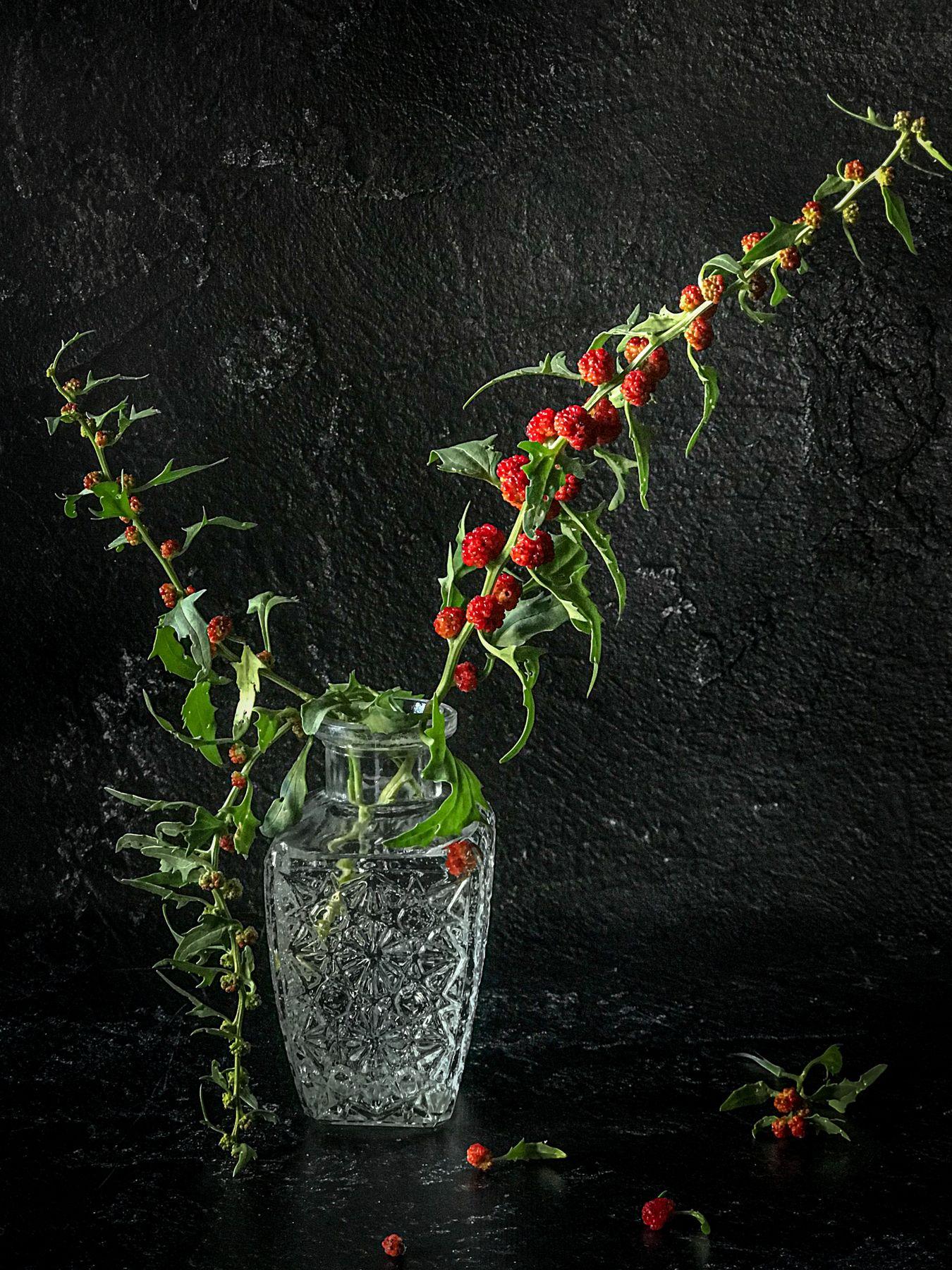 Шпинат земляничный Пряность земляничный ягоды натюрморт