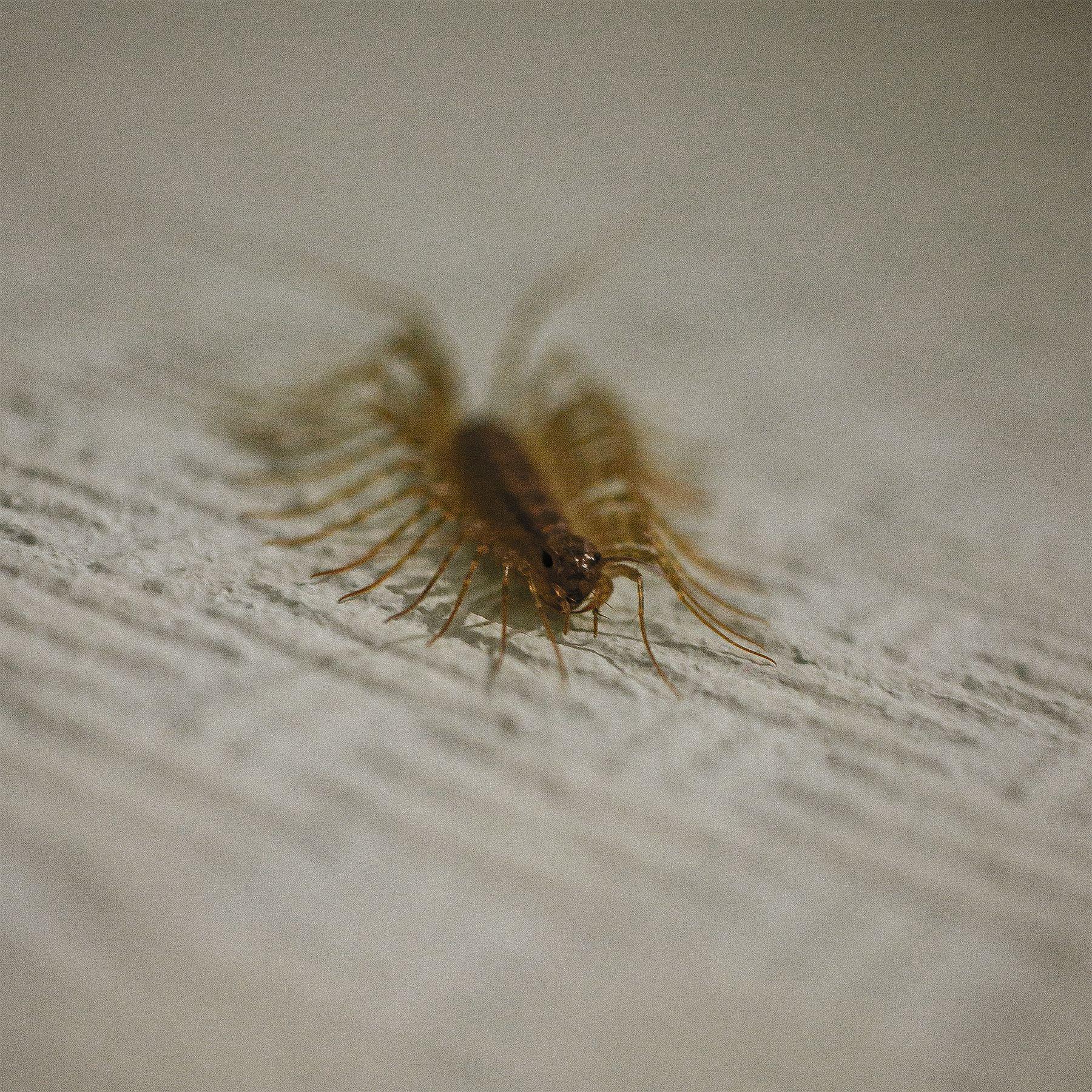 Страх насекомые макро многоножка