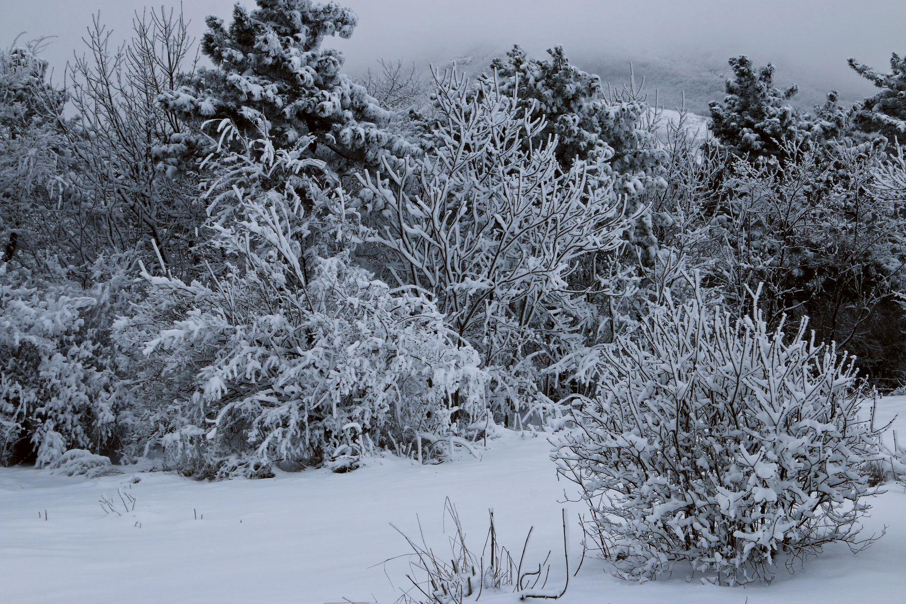 *** снег пятигорск.зима