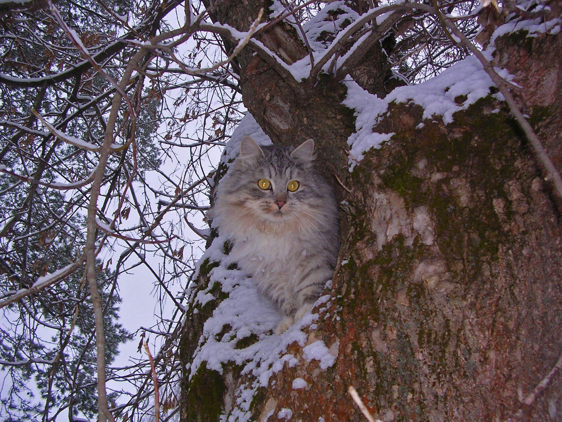 Котофеич кошки животные