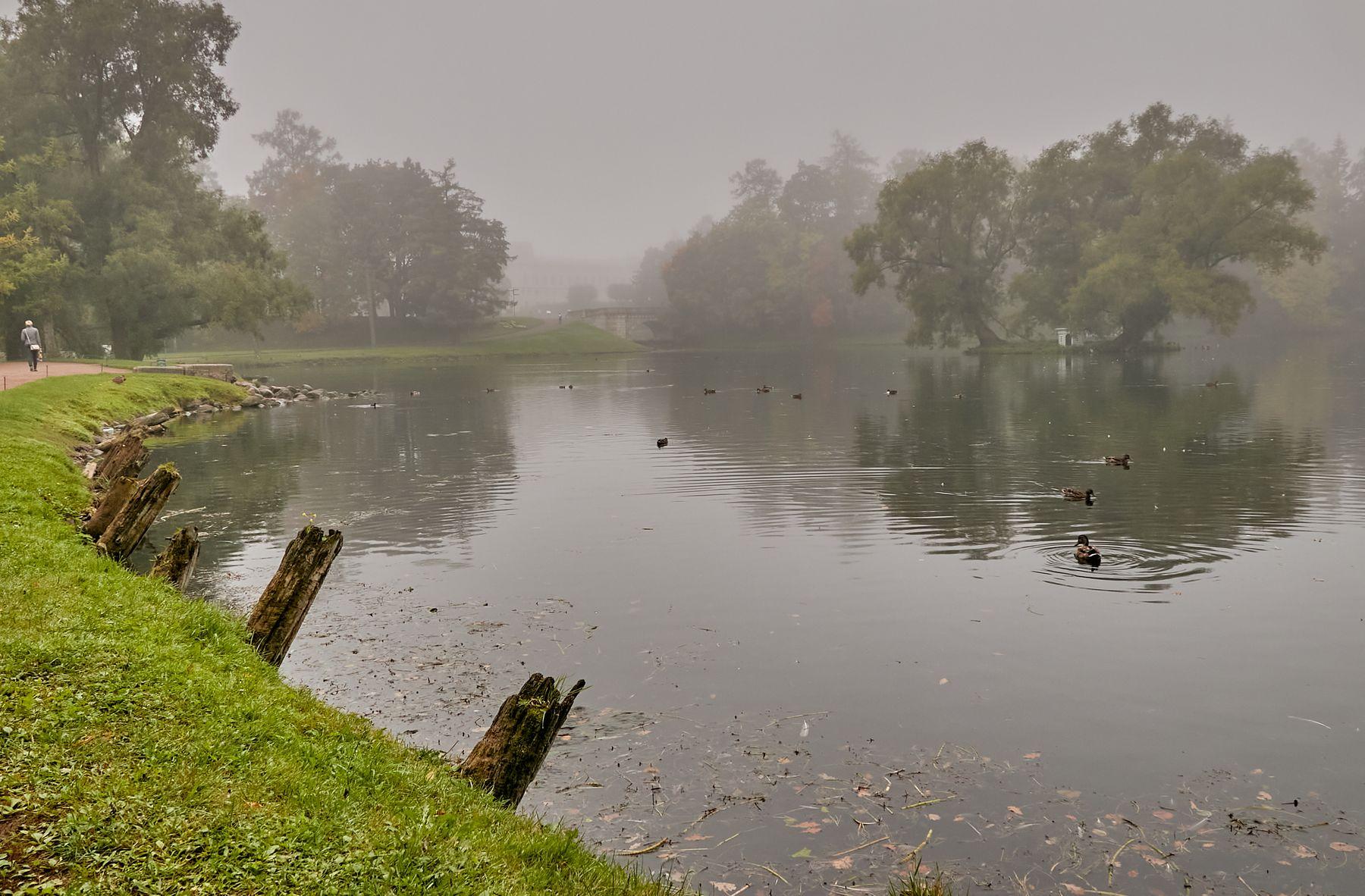 *** туман осень парк