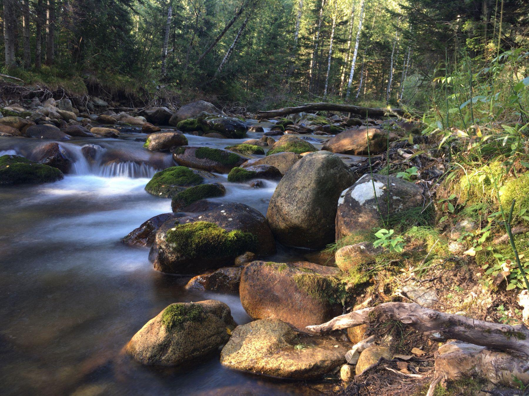 Таёжная речка Алтай осень река тайга