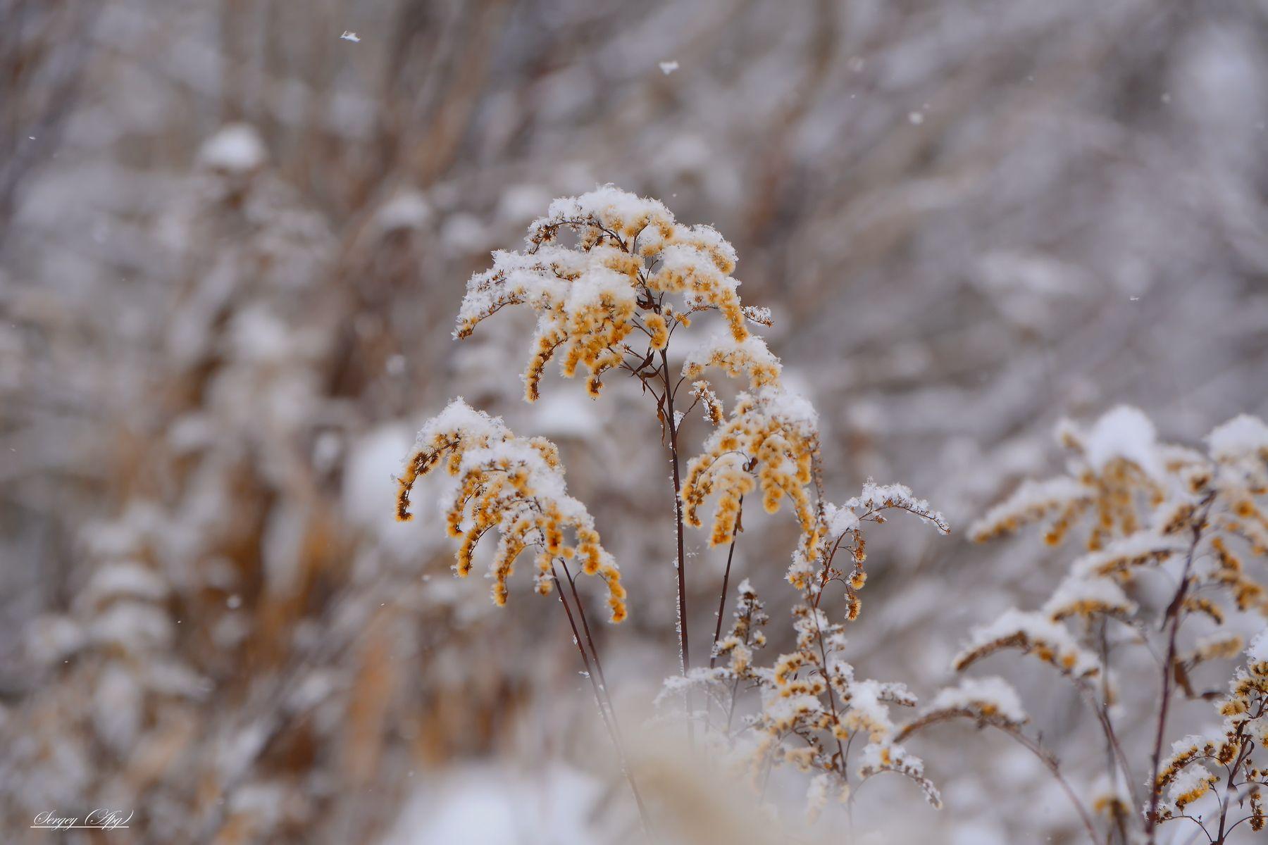 ***Однажды зимой.....