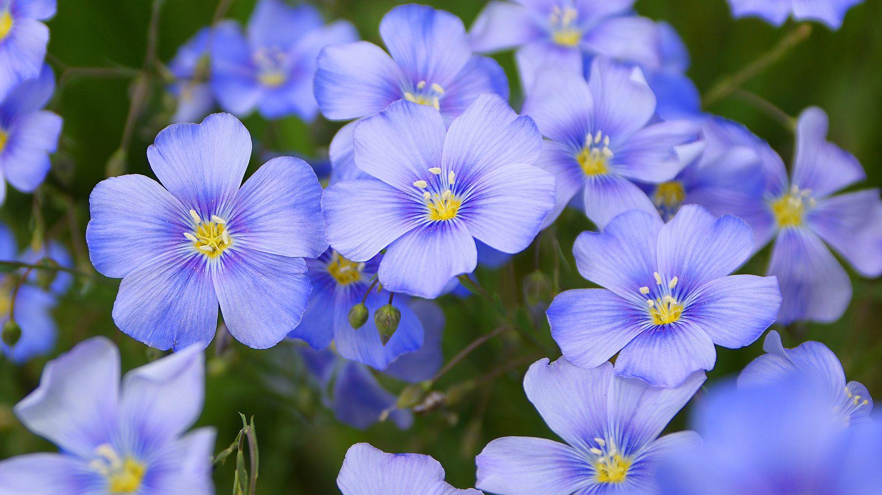 Цветы...цветы...