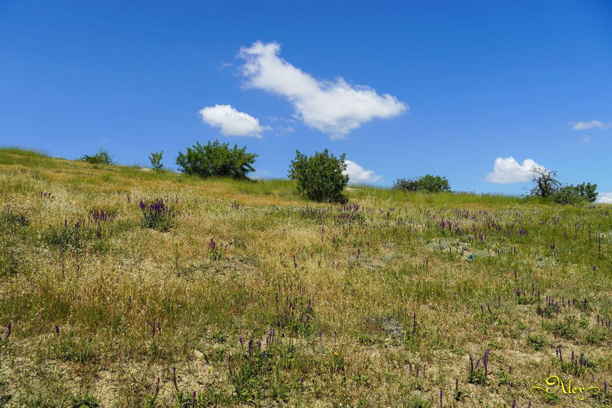 *** Крым природа лето пейзаж