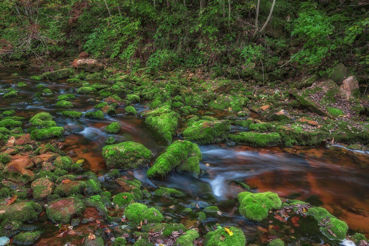 Долина реки Прикша. Река Прикша долина реки Прикши