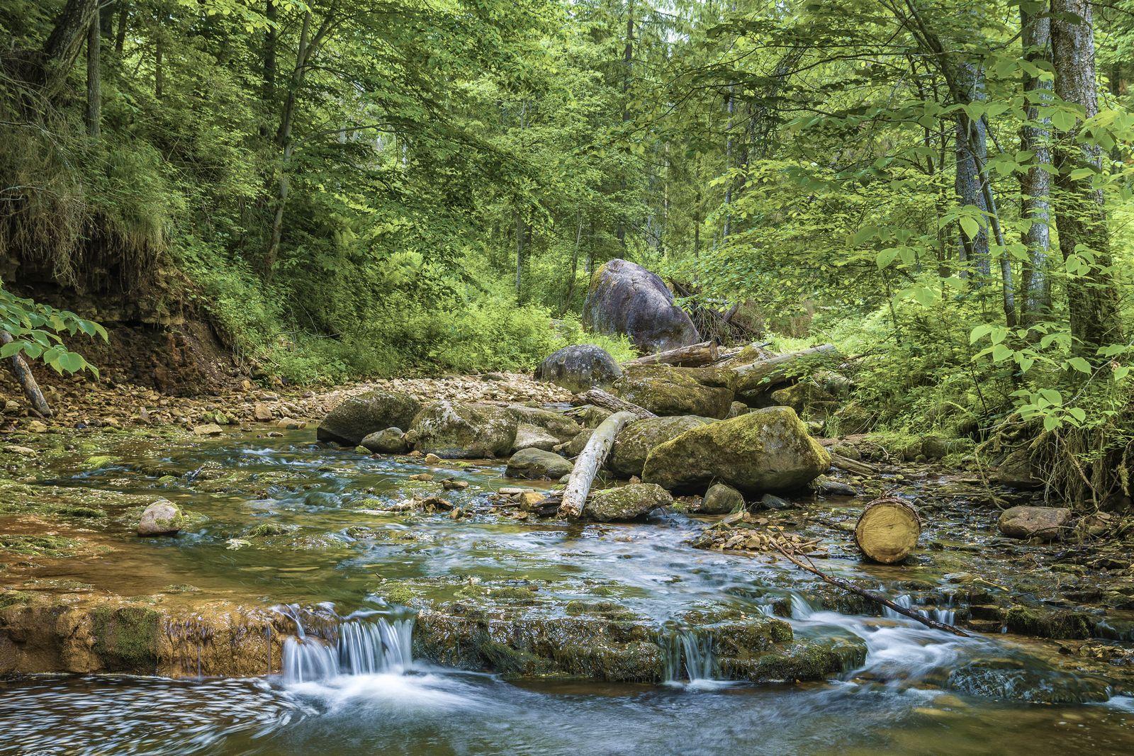 Долина реки Прикша. Прикша Новгородская область Боровичи
