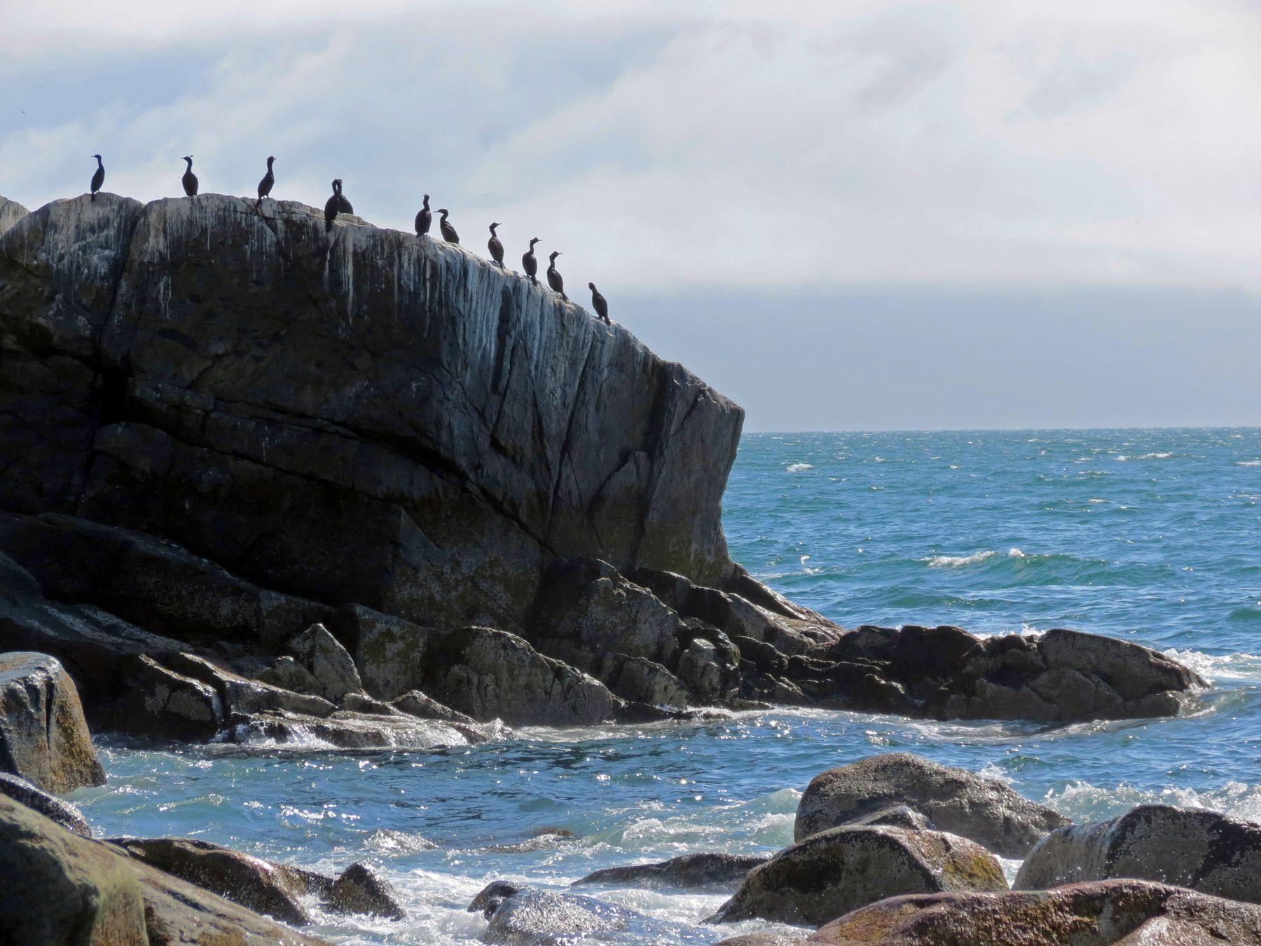 морской пейзаж бакланы море охотское талан остров магаданская область