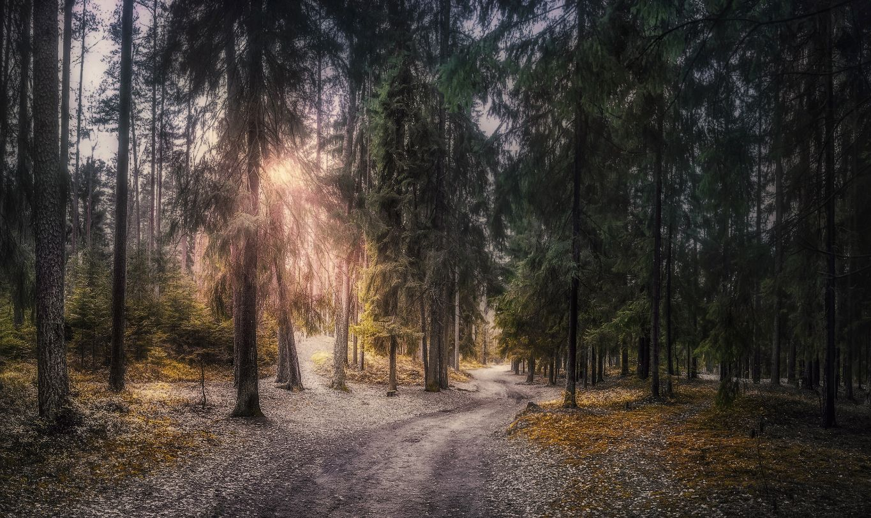 ***Утро в лесу осеннем.